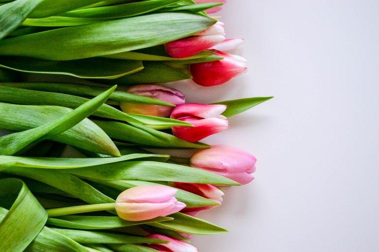 tulips (1 of 4)