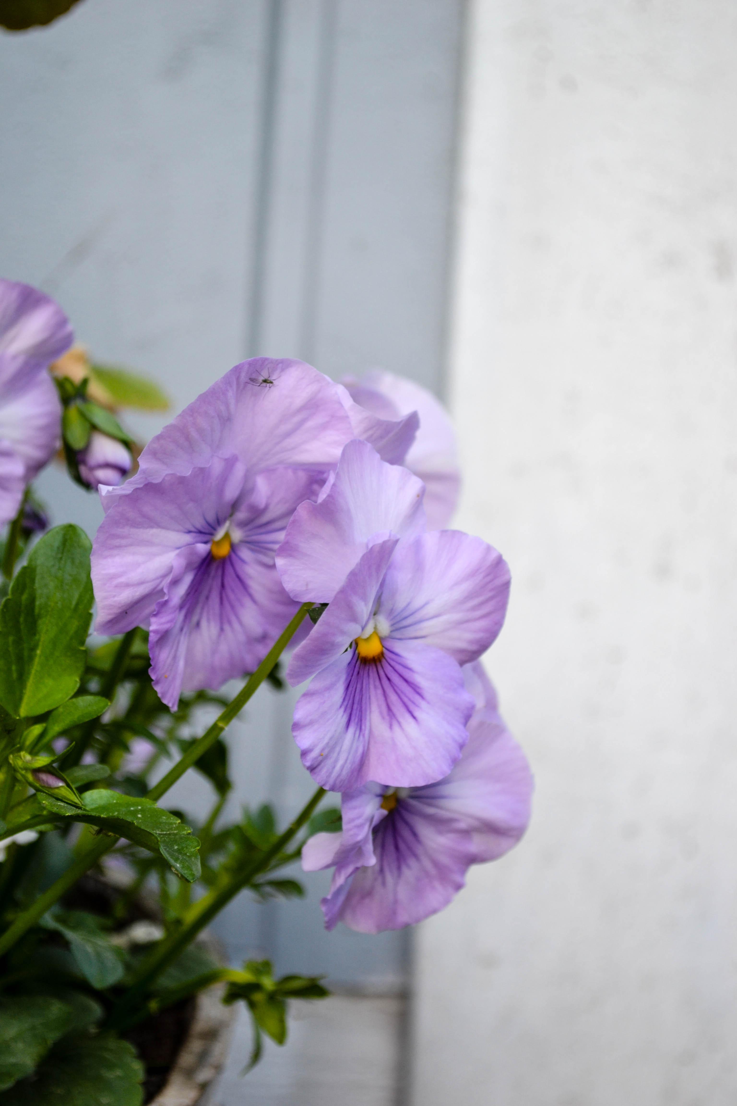 flowerdiaryS16 (10 of 13)