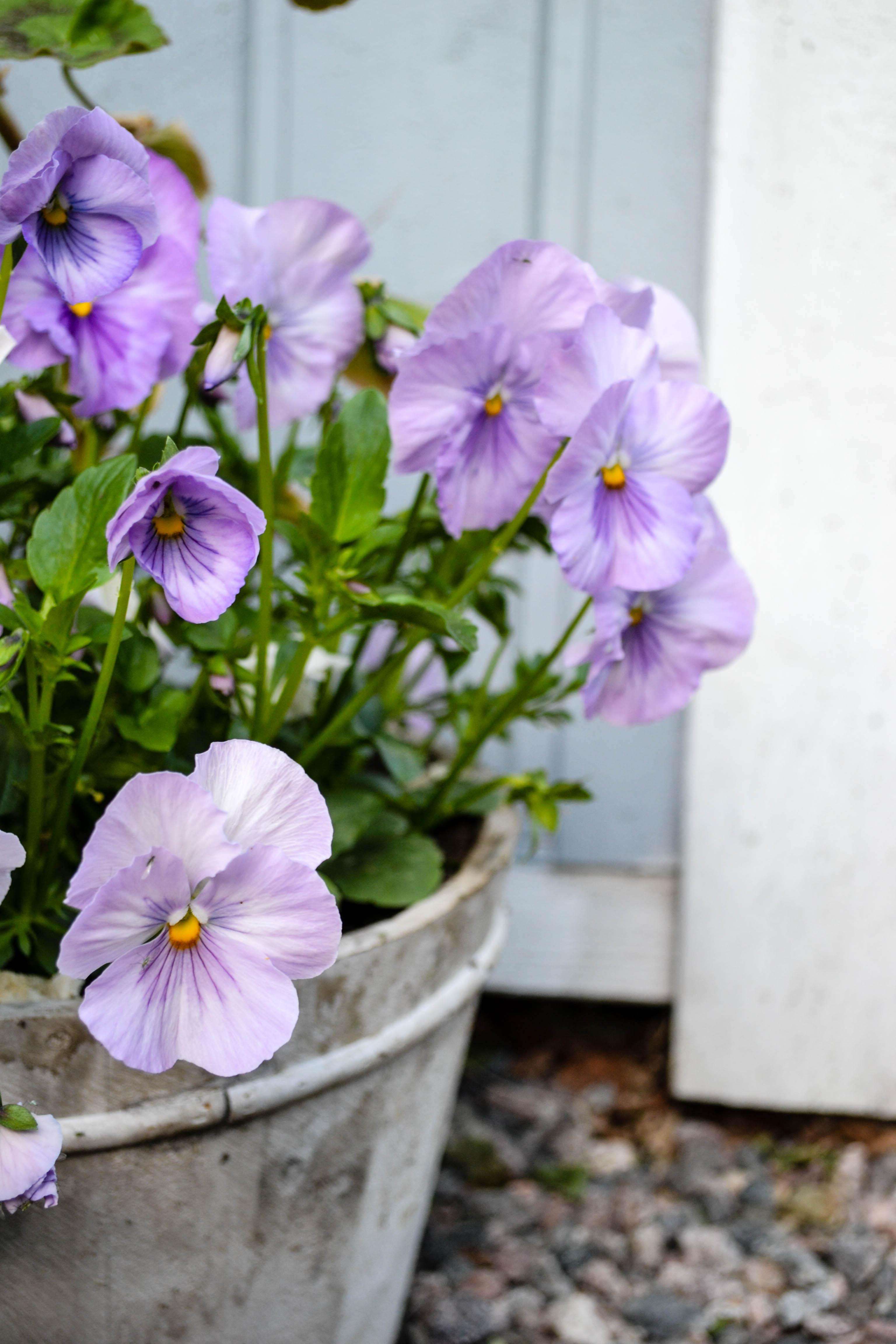 flowerdiaryS16 (11 of 13)