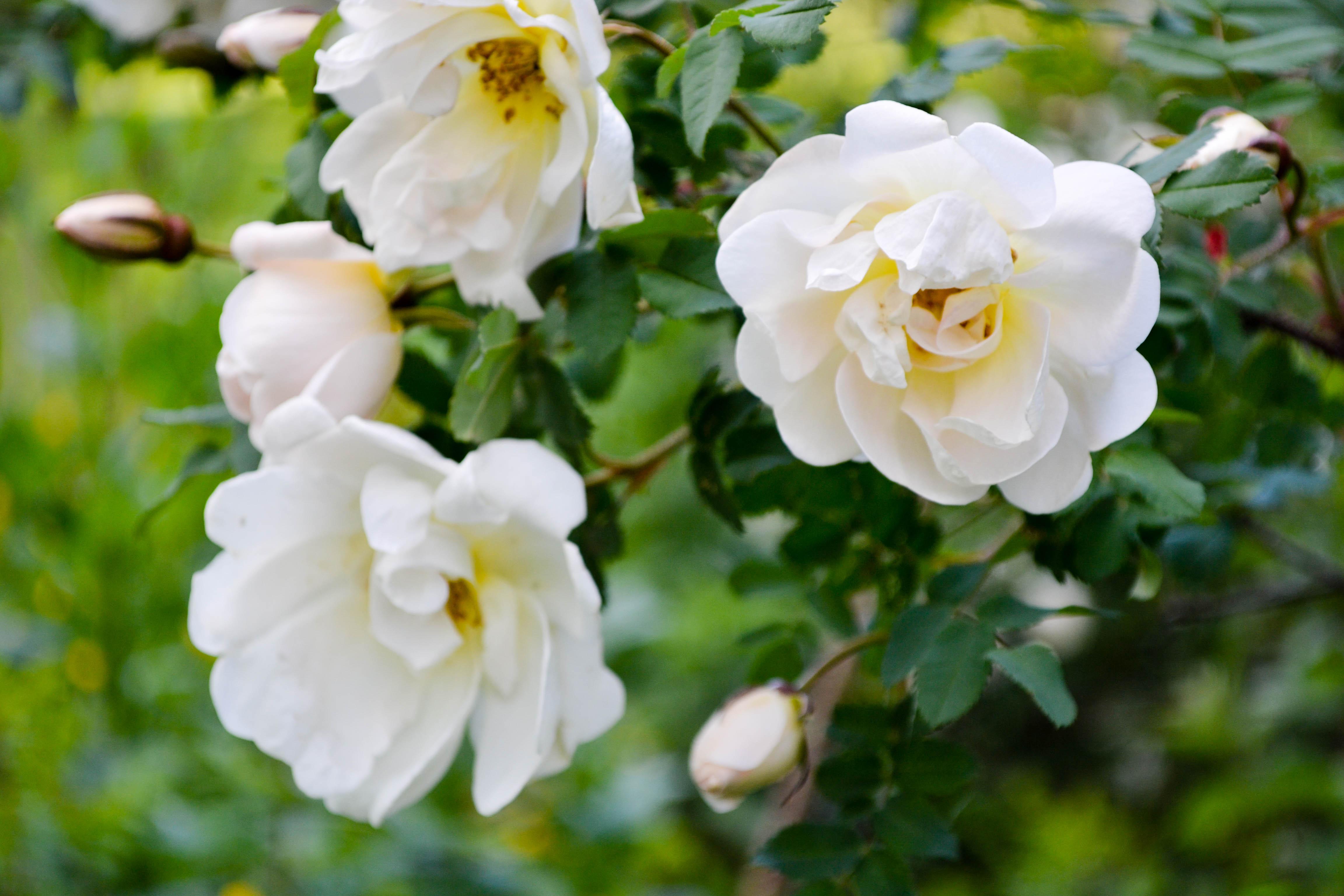 flowerdiaryS16 (13 of 13)