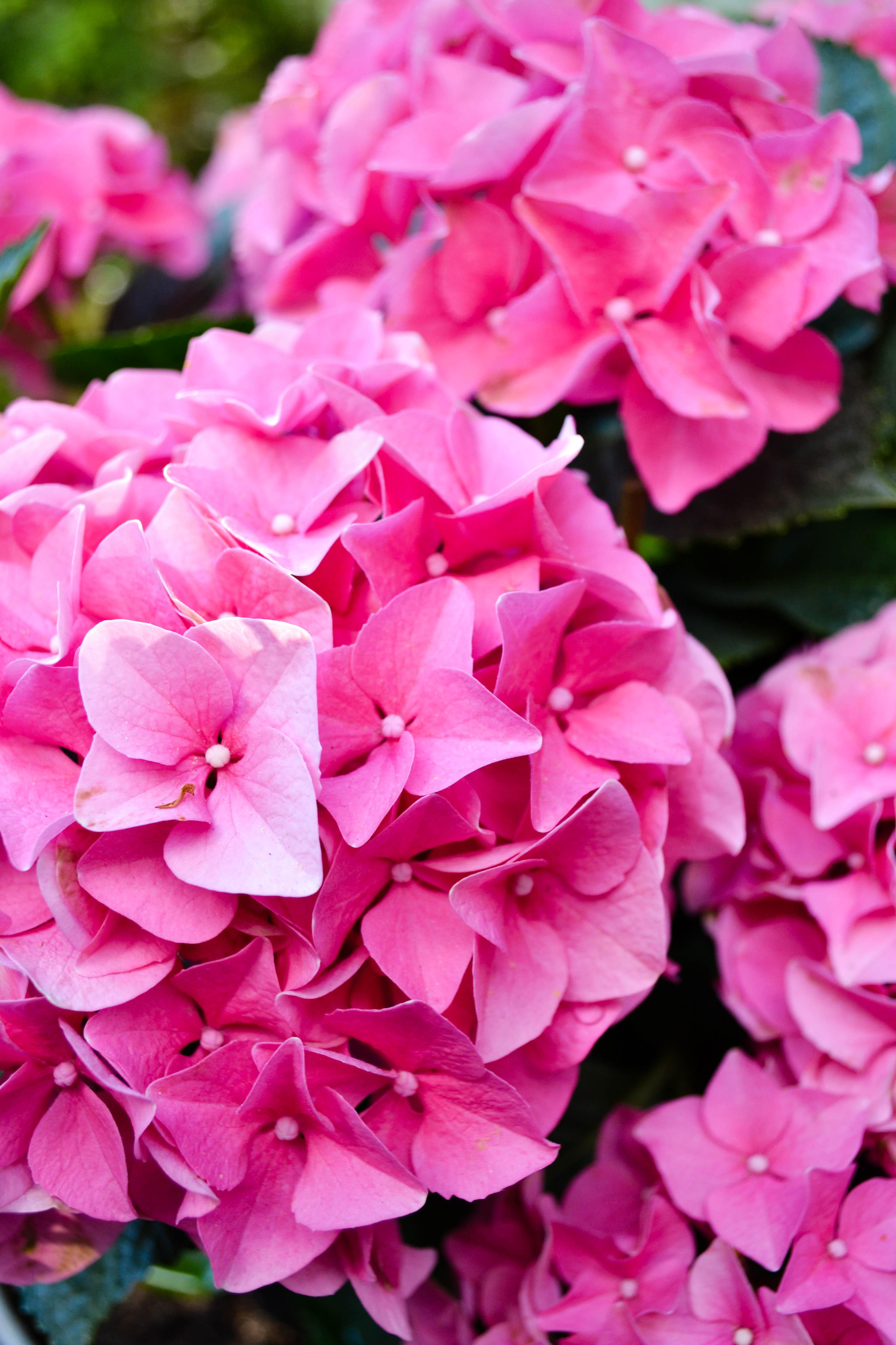 flowerdiaryS16 (4 of 13)