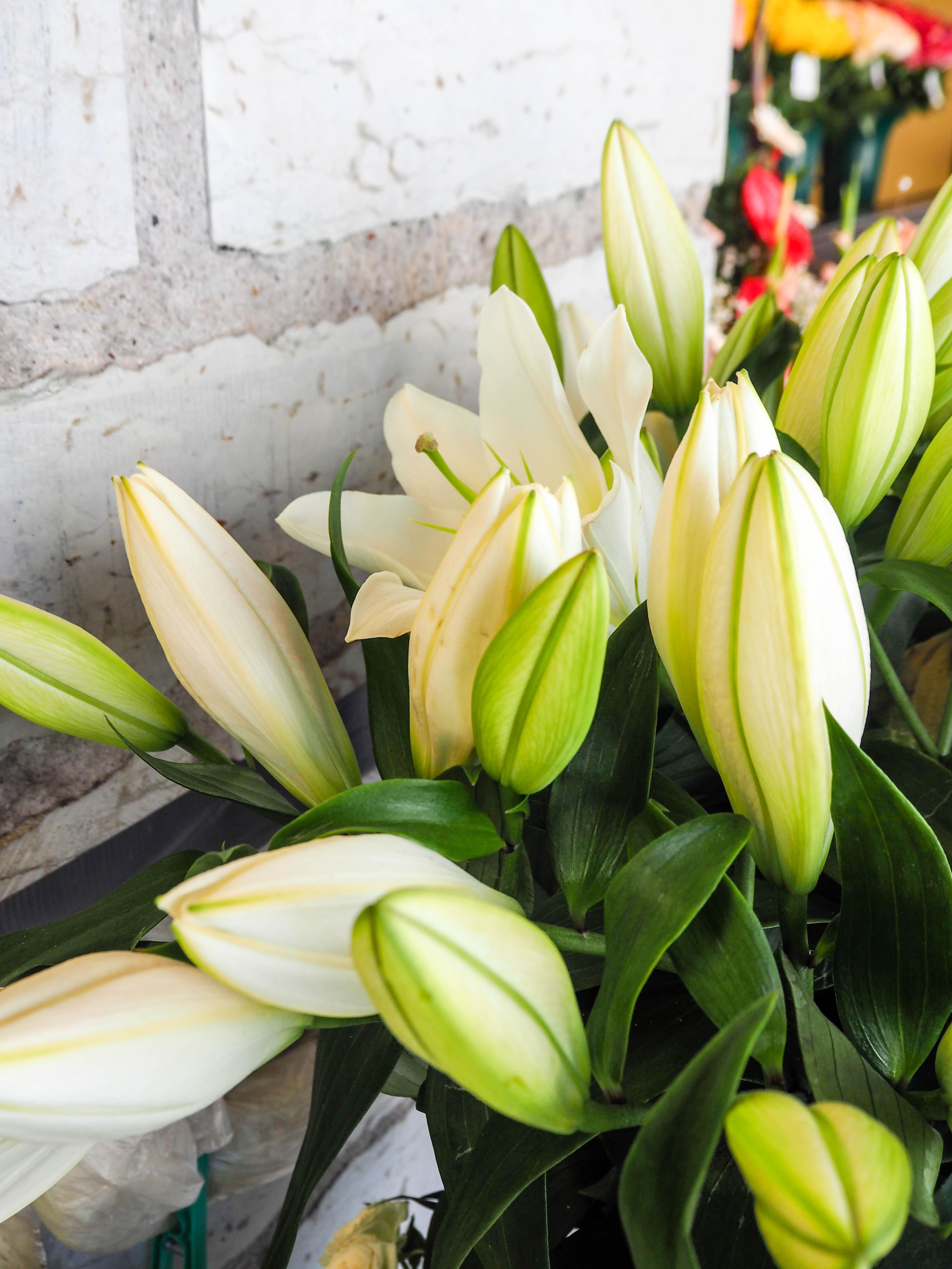 flowermarketTallinn16 (16 of 17)