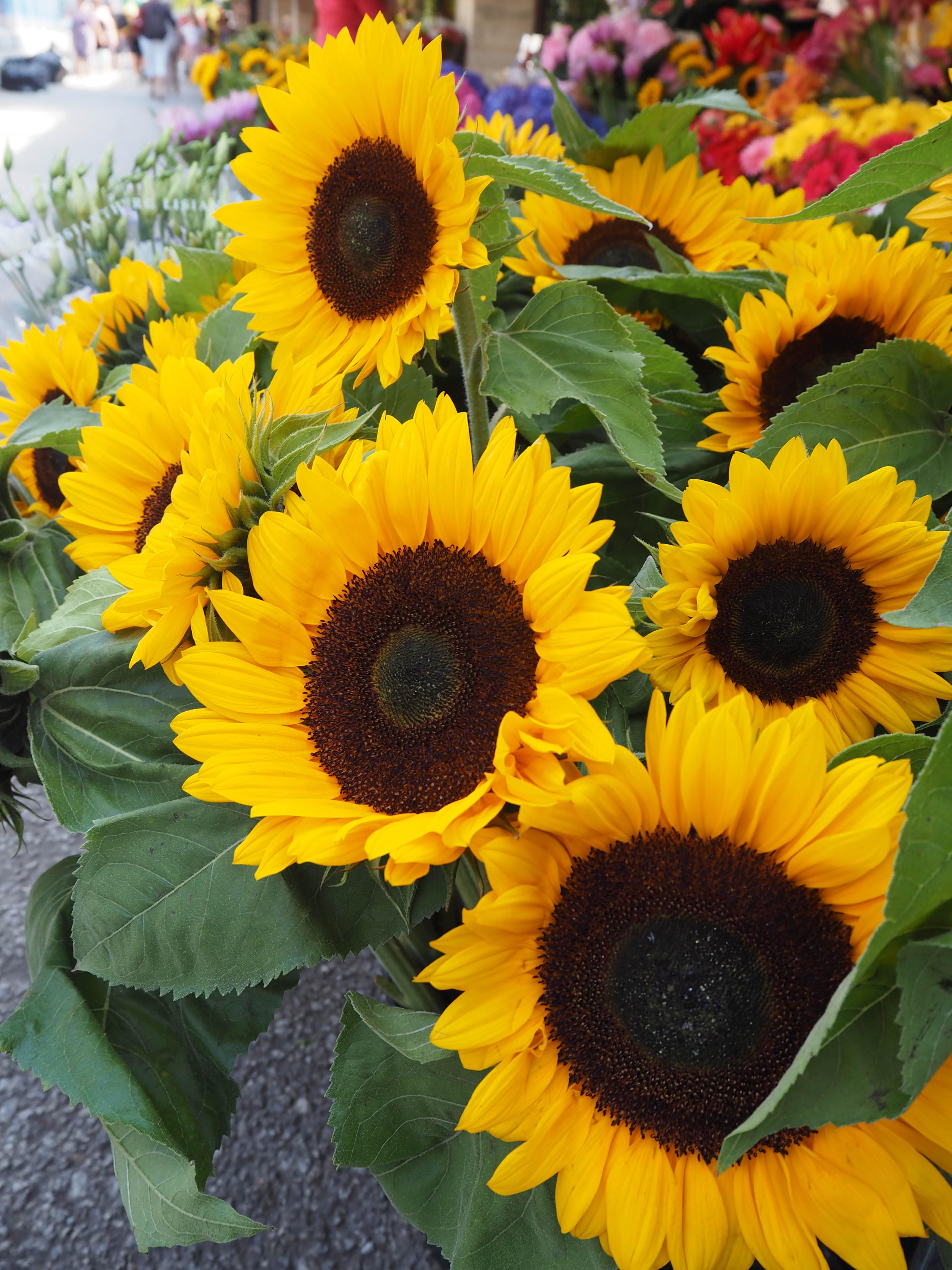flowermarketTallinn16 (7 of 17)