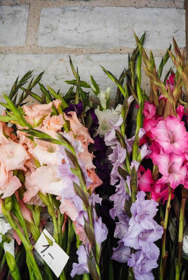 flowermarketTallinn16 (9 of 17)