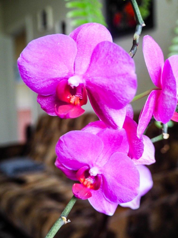 orkidea (6 of 6)